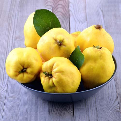 Саджанці айви Лимонна